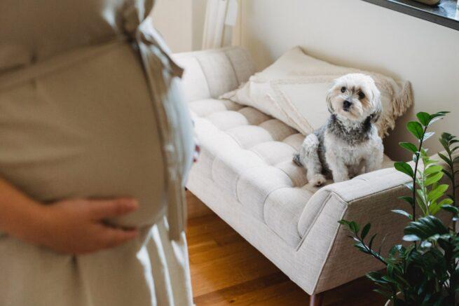 gravidanza protetta